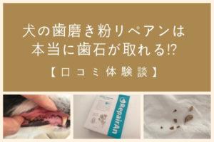 犬の歯磨き粉リペアンはひどい歯石も溶かす!?【口コミ体験談】