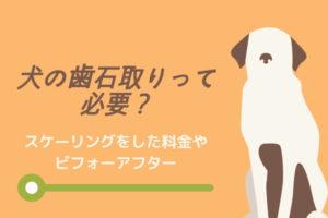 【体験談】犬の歯石取りって必要?スケーリングをした料金やビフォーアフター